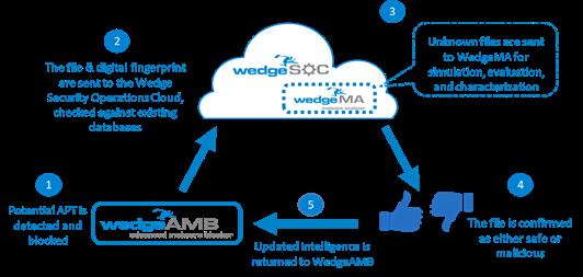 webge-AMB
